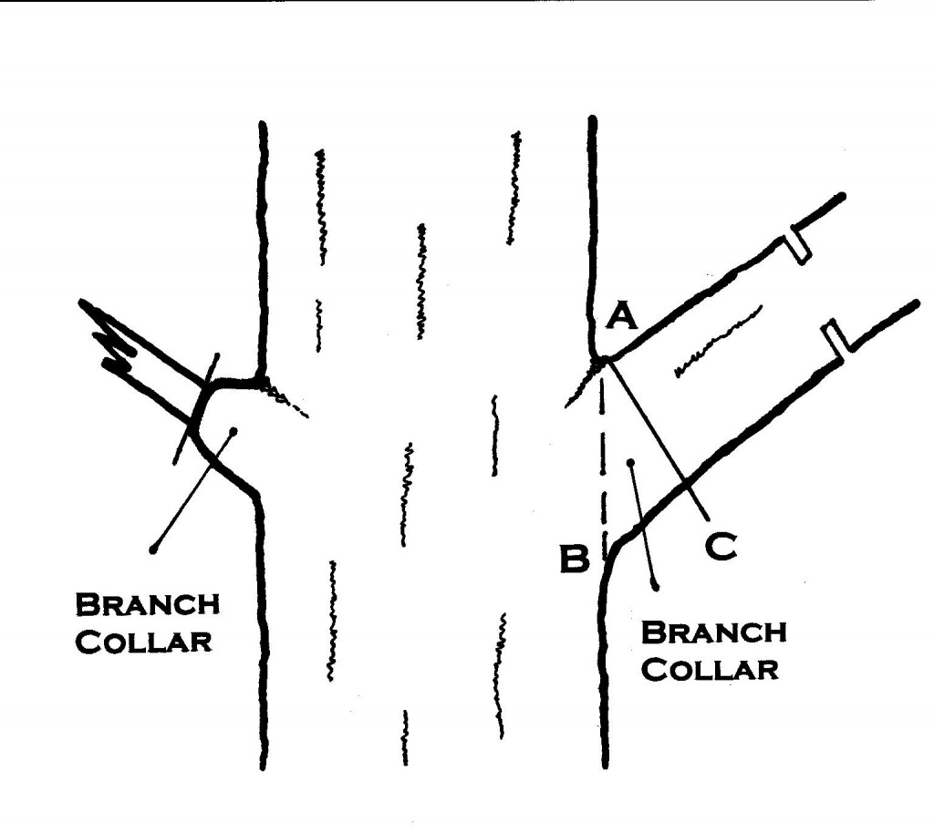 collar cuts crop